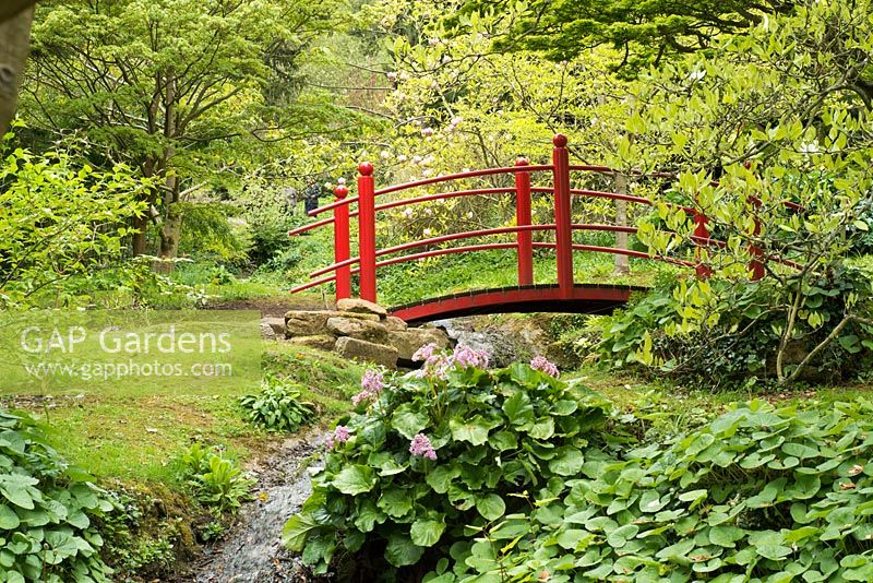Red Japanese-style bridge over a stream with Bergenia and Magnolia in background