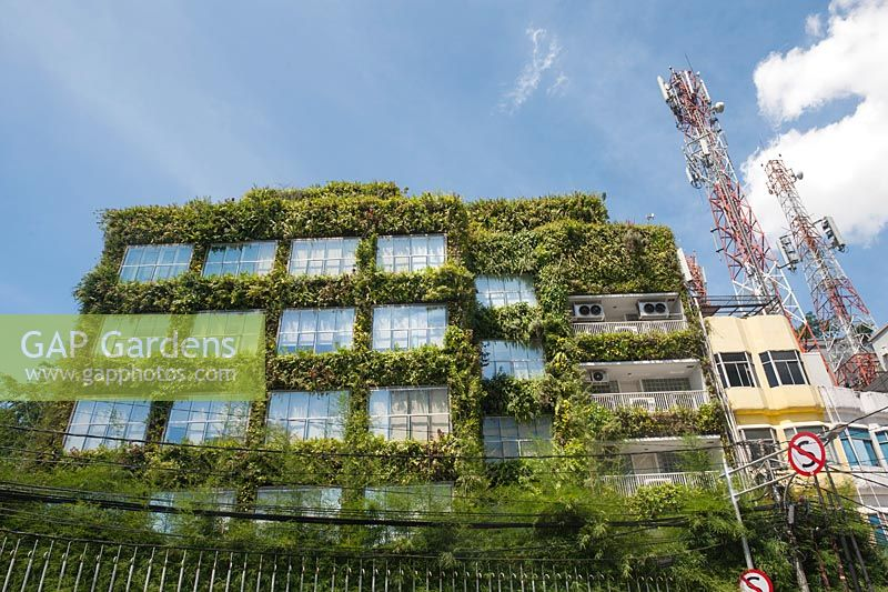 Green wall. Building on the corner of Jalan Tabah Abang II, Jakarta Indonesia totally covered in plants.
