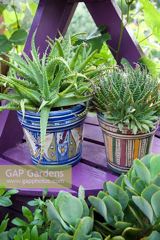 Patterned painted decorative pots on purple plant stand with succulents. Patio garden. Owner: Pattie Barron, garden writer