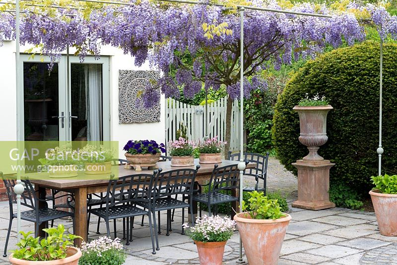 A stone terrace enclosed by the house and giant yew dome is overhung by a pergola bearing Wisteria sinensis, Chinese wisteria. On the dining table are pots of pink diascia and blue petunia.