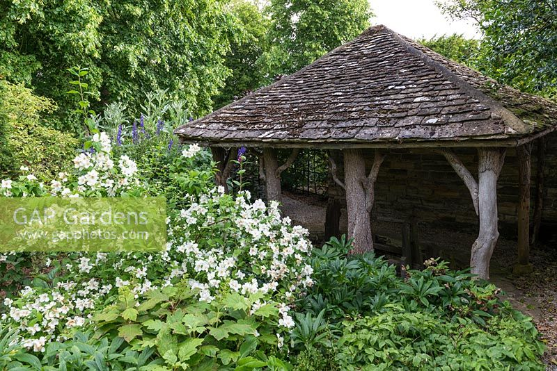 A listed garden building beside a white Philadelphus shrub.