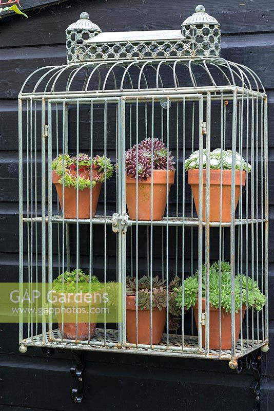 Terracotta pots of succulents and displayed in wirework cage shelving.