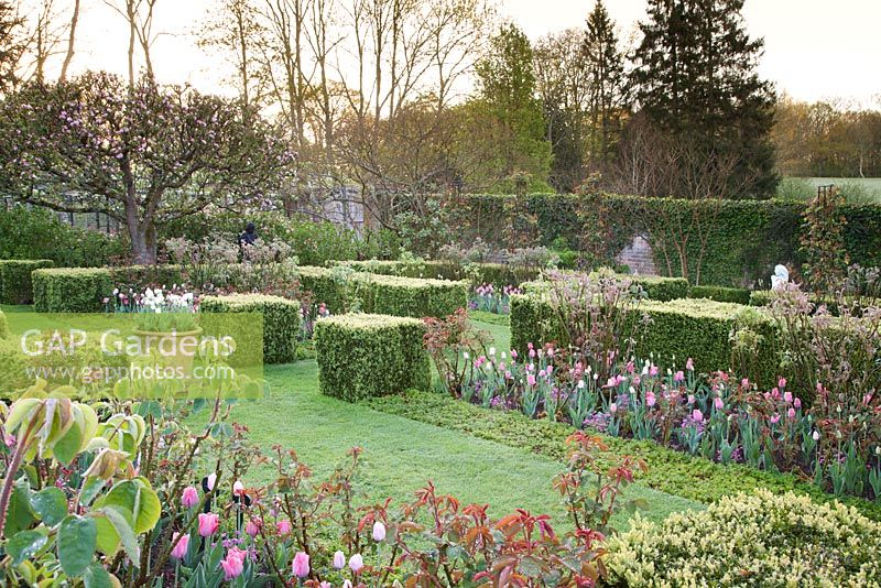 Formal grass pathway in walled garden with mixed pink Tulipa 'Palestrina', Tulipa 'Pink Diamond', Myosotis 'Rosylva' and clipped hedges with decorative terracotta container and sculptures Garden: Pashley Manor, Sussex