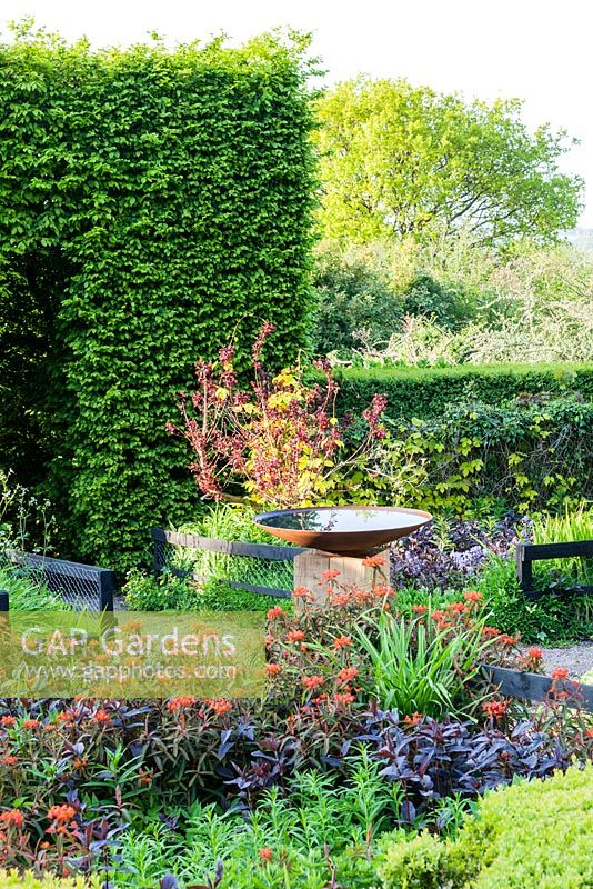 The Front Garden: Tunnel of Carpinus betulus -