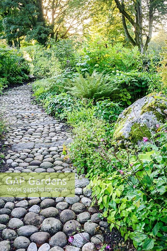 A path of cobbles and stone edged with epidmedium leads through the woodland garden planted with hellebores, ferns, Solomon's Seal and many other choice plants.