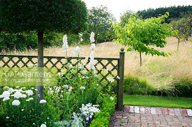 The White Garden features clipped Phillyrea latifolia standing in box edged beds containing Allium nigrum, Leucanthemum x superbum 'Fiona Coghill', dianthus and tall white delphiniums. Felley Priory, Underwood, Notts, UK