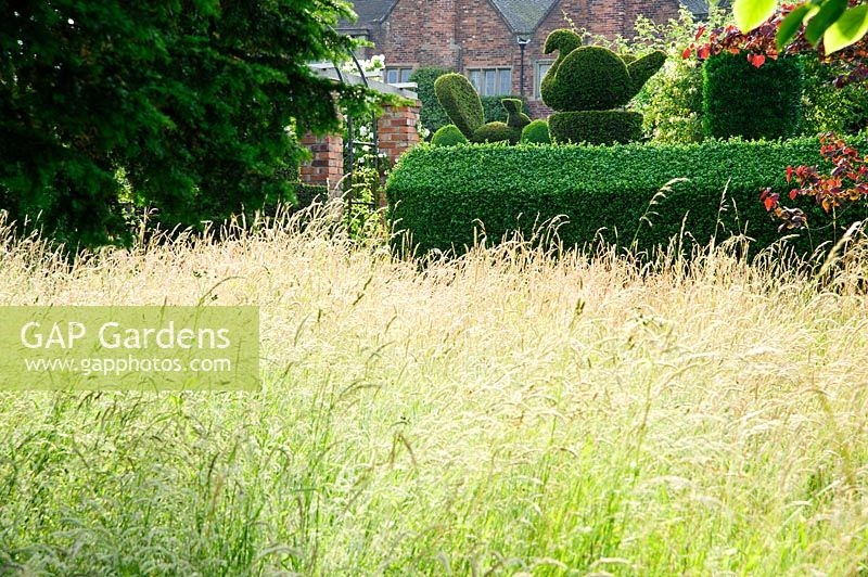 Long Meadow Grasses With Clipped Yew Hedges And Topiary In The Formal Garden  Beyond. Felley