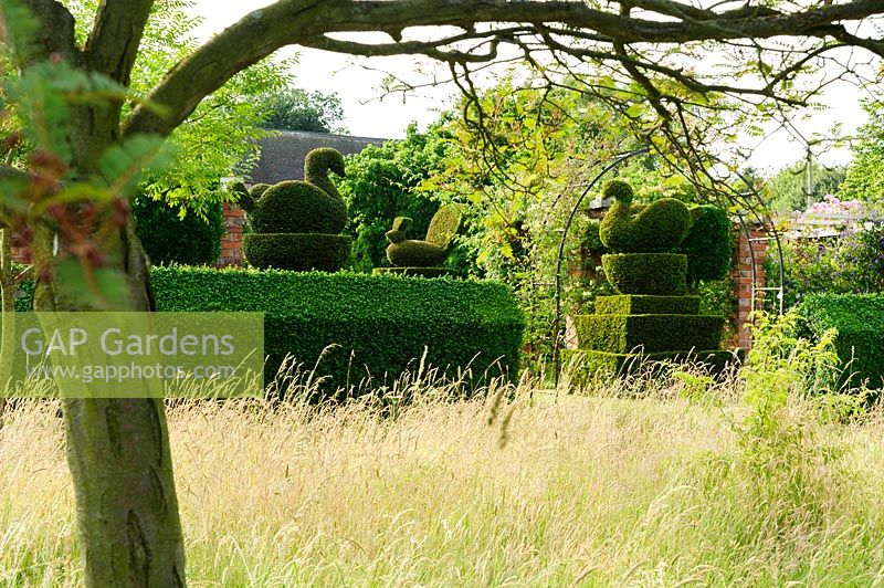 gap gardens long meadow grasses with clipped yew hedges. Black Bedroom Furniture Sets. Home Design Ideas