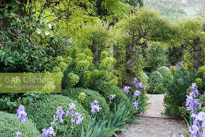 Hanham Court Gardens, Bristol. Early summer garden with topiary balls, Iris and Euphorbia