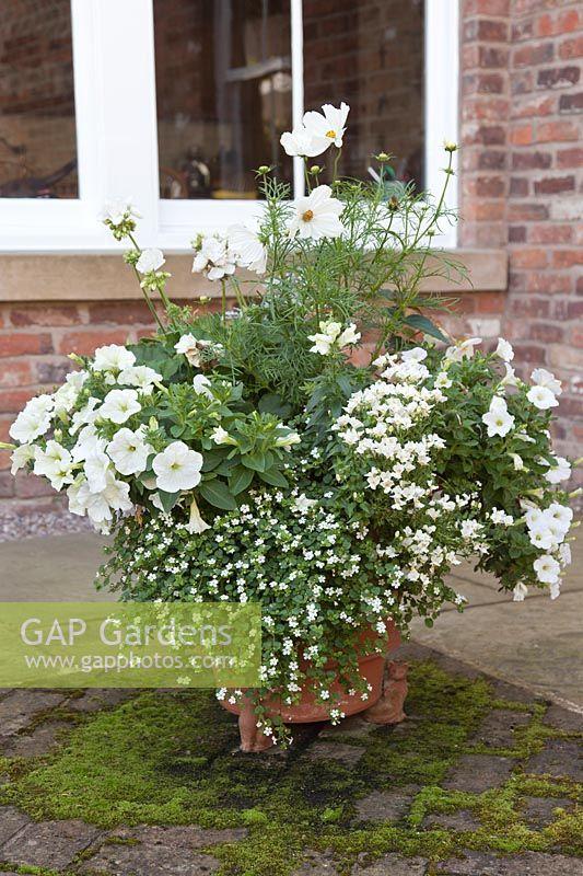 Faire Calmer White Bedding Plants For, White Flower Bedding Plants