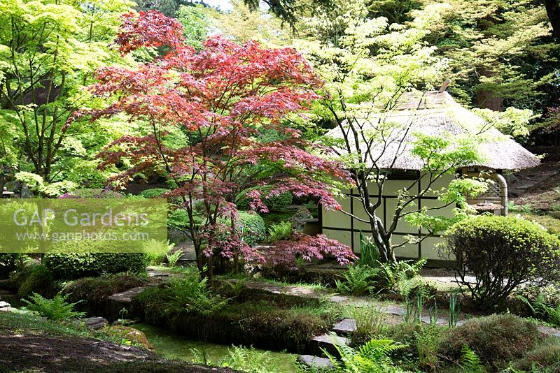 The tea house in the Japanese garden, Tatton Park, Cheshire