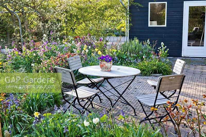 Relaxing area on a patio with borders in spring. Helleborus x hybridus syn. Helleborus orientalis - Hellebore, Hyacinthoides hispanica Spanish Bluebells, Lunaria annua honesty, Narcissus, Myosotis - Forget me nots. Design: Thea Maldegem