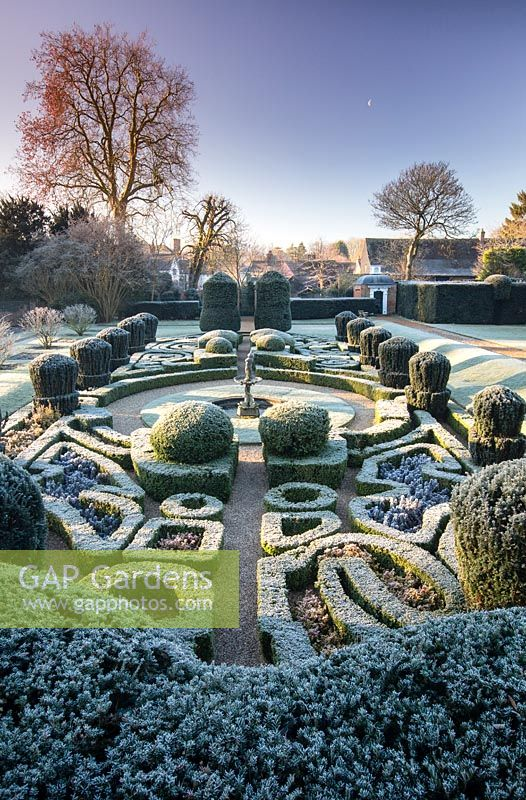 View of frosty parterre. The Dutch Garden, Bridge End Garden, Saffron Walden, Essex