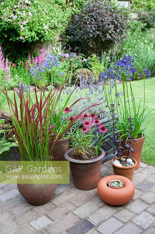 Collection of pots in small garden filled with Imperata cylindrica 'Red Baron', Agapanthus, Echinacea purpurea, Lavender, Sempervivum