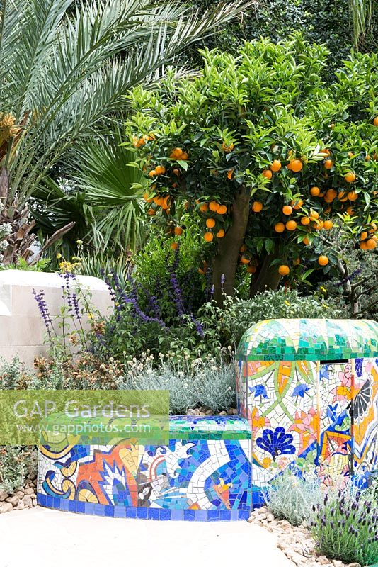 The Viking Cruises Garden of Inspiration -Citrus sinensis in a mosaic tiled container - RHS Chelsea Flower Show 2017