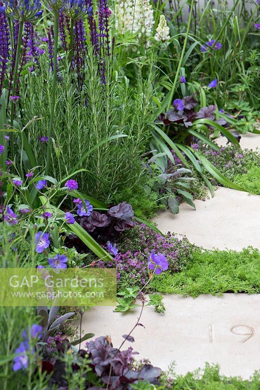 The Wellbeing of Women Garden - stepping stones marking each decade of the charity's work with Thymus serpyllum between and other mixed planting - RHS Hampton Court Flower Show 2015