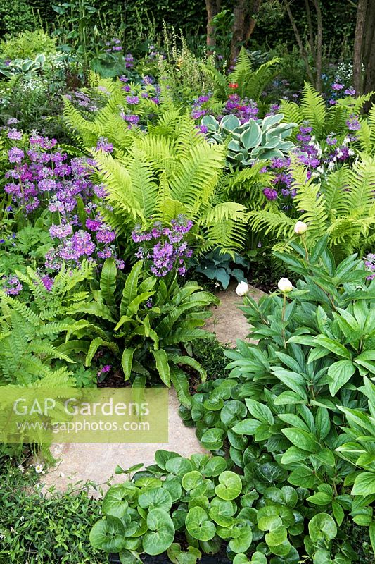 Path surrounded by shade loving ferns - Matteuccia struthiopteris, Primula beesiana, Cyrtomium falcatum, Osmunda regalis, Asplenium scolopendrium, Asarum europaeum, Paeonia lactiflora 'Krinkled White' - Peony - The Stonemasons Garden - RHS Chelsea flower show 2017 - Designer: Chris Beardshaw - Sponsor: Morgan Stanley