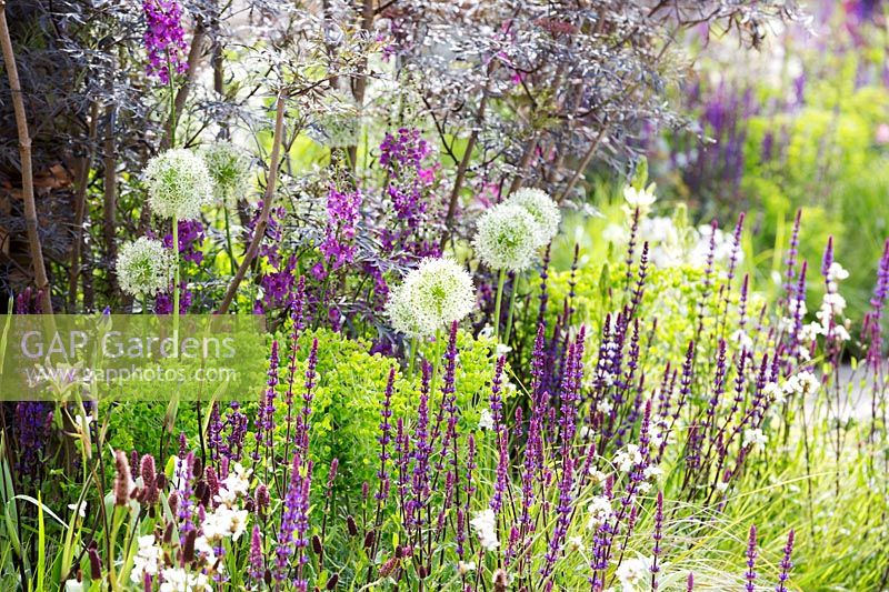 The RHS Greening Grey Britain Garden - Mixed border planted with Alliums 'Mount Everest' and Salvia nemorosa 'Caradonna' - RHS Chelsea Flower Show 2017