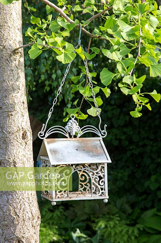 Decorative metal bird feeder on a ginkgo tree