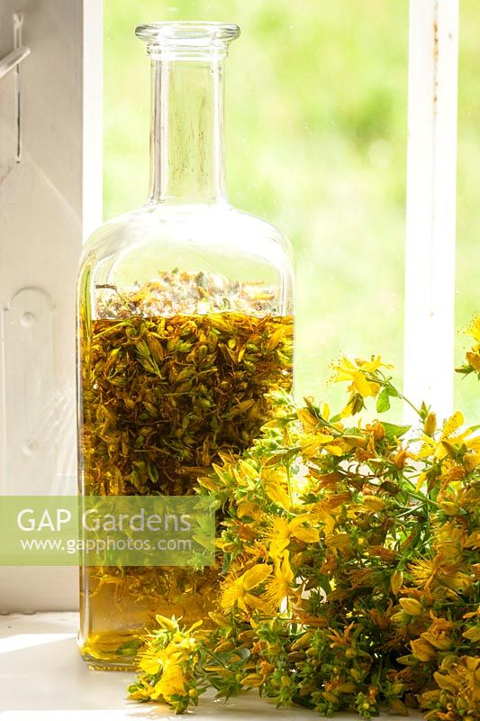 A bottle with Hypericum perforatum - St johns wort oil made of cold-pressed olive oil
