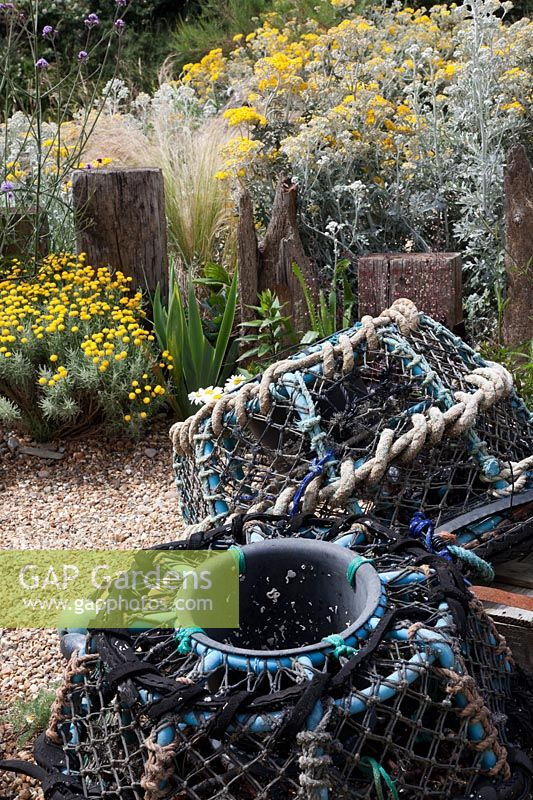 Lobster pots in seaside themed front garden planted with coastal plants  including Cineraria 'Silver Dust', Santolina 'Lambrook Silver' , Stipa tenuissima, Verbena bonariensis and decorated with   driftwood sculptures