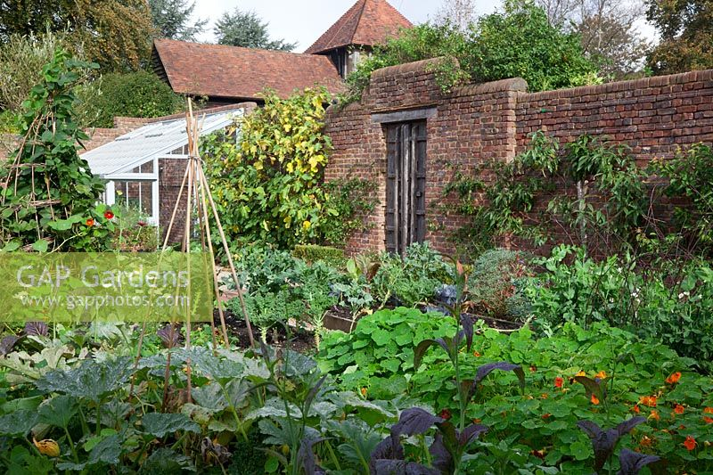 Walled kitchen garden  in October. Lean to greenhouse and old oak door. Self seeded Nasturtiums  tumble over the raised beds while late crops of Courgettes, Mustard leaves, Runner Beans and Kale abound.  A Fig clothes the wall - Brightling Down Farm