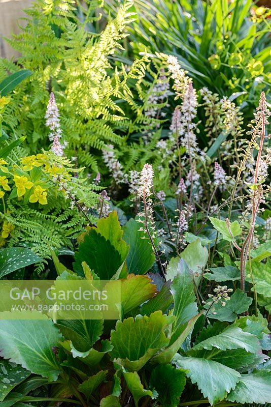 Planting of Bergenia, Heuchera, ferns and Euphorbia in green and white - BBC Gardener's World Live, Birmingham 2017 - The Anniversary Garden: A Brief History of Modern Gardens - Designer: Prof. David Stevens
