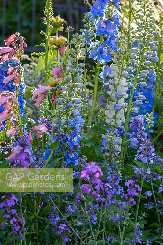Planting of Salvia, Penstemon and Delphiniums in pinks and blues - BBC Gardener's World Live, Birmingham 2017 -The Anniversary Garden: A Brief History of Modern Gardens - Designer: Prof. David Stevens