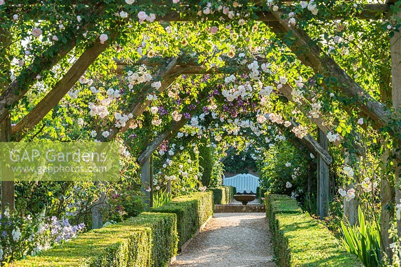 View along rose covered pergola. June