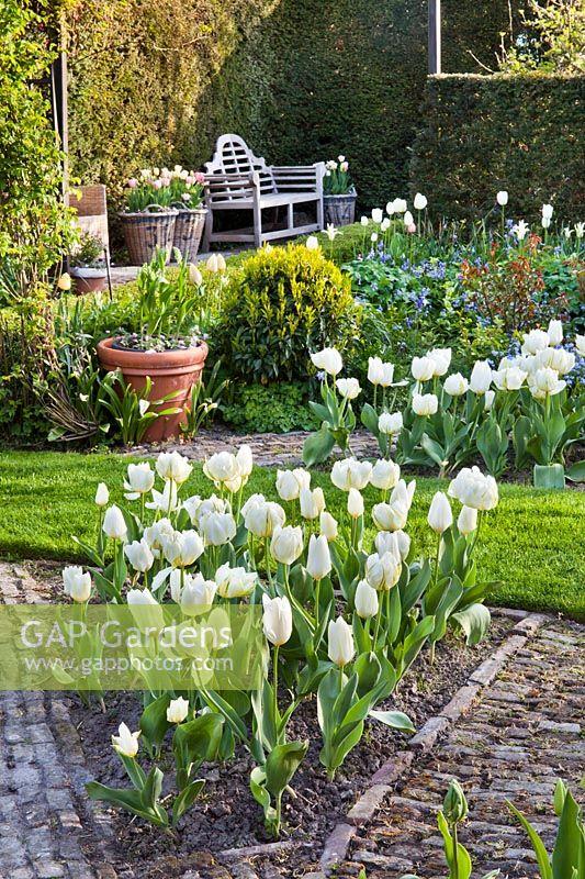 GAP Gardens - Spring garden with Tulipa \'Purissima\' and Tulipa ...