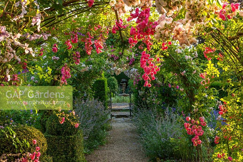 Gravel path with arch, Nepeta 'Six Hills Giant', Rosa 'Princess Louise' and Rosa 'Dorothy Perkins'