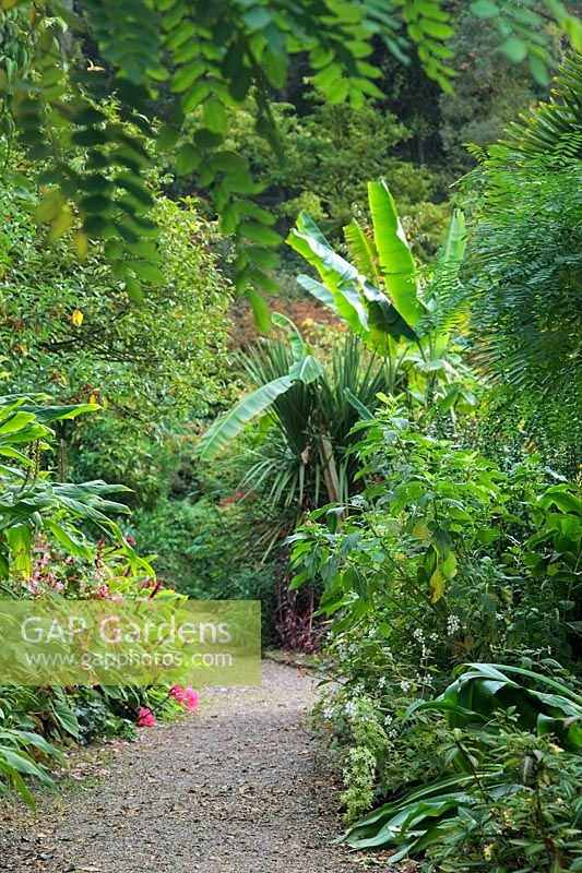 Tropical foliage in Lady Anne's garden at RHS Rosemoor