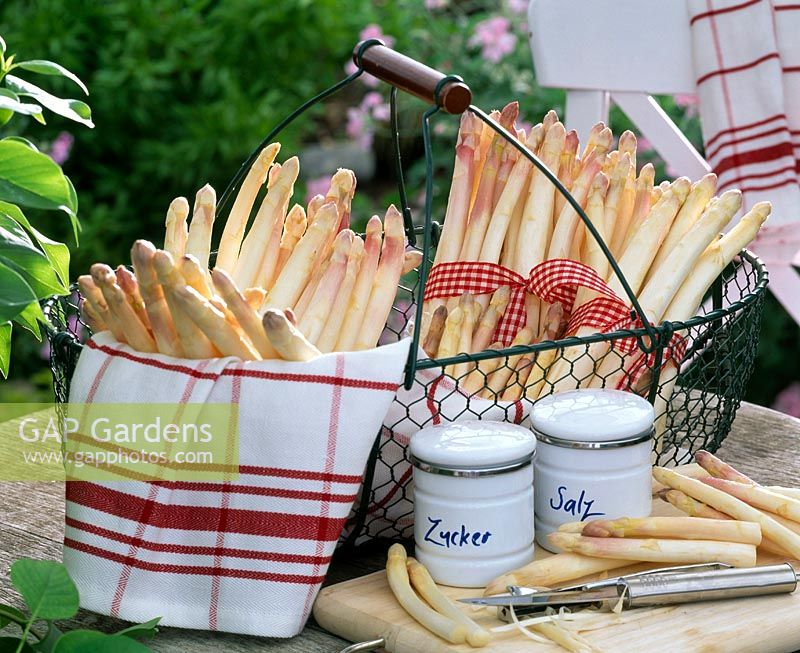 White asparagus ( Asparagus ) in metal basket, kitchen towel