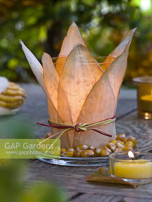 Glass with leaves and seeds of Zea ( maize ) as a lantern