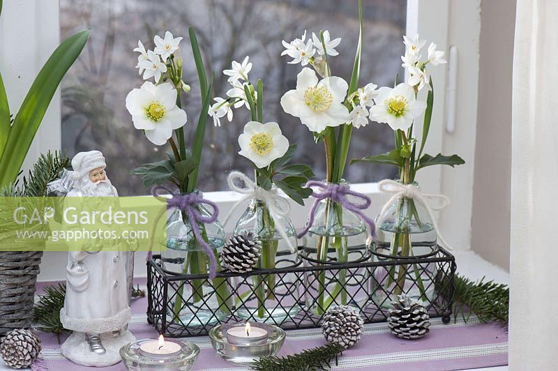 Small glass bottles with Narcissus 'Ziva' ( Tazetta - narcissus ) and Helleborus