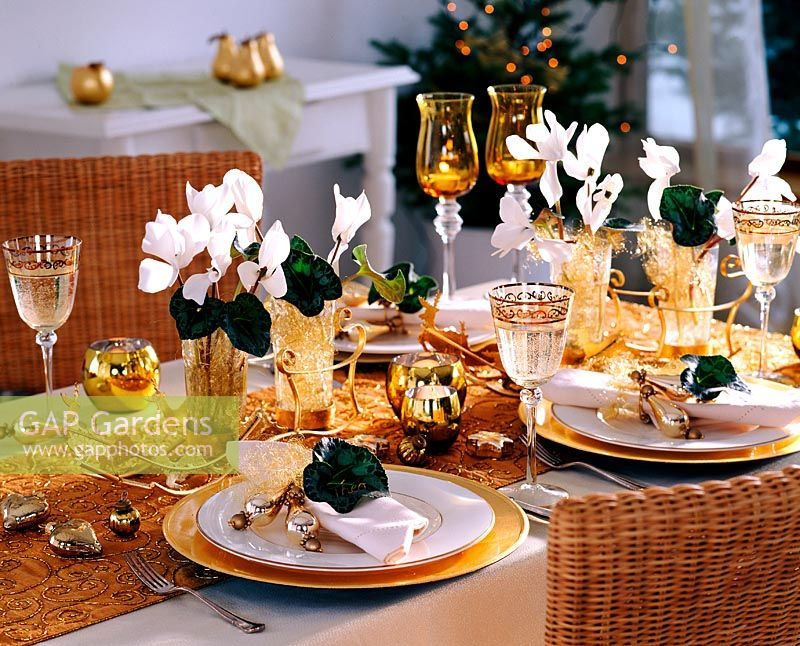 White and gold table decoration - Cyclamen - Cyclamen, angel hair as plug-in help, Blä