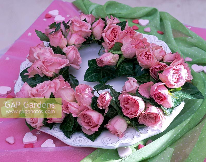 Rosa ( pink roses ), Hedera ( ivy )
