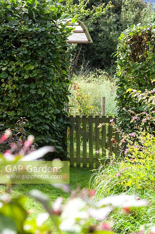 Derry Watkins Garden at Special Plants, Bath, UK. Small wooden gate in gap in hedge