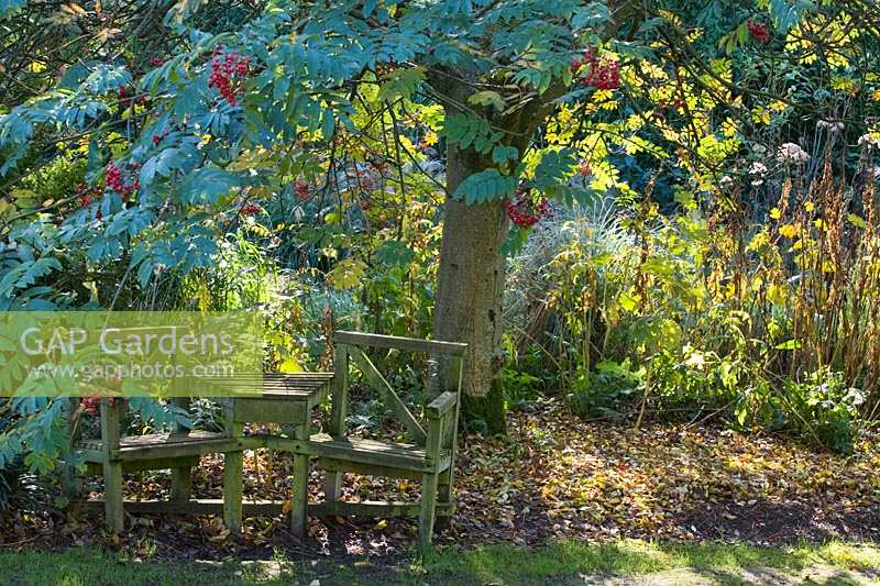 Knoll Gardens, Dorset, UK ( Neil Lucas ) autumn wooden bench and table beneath Sorbus with berries