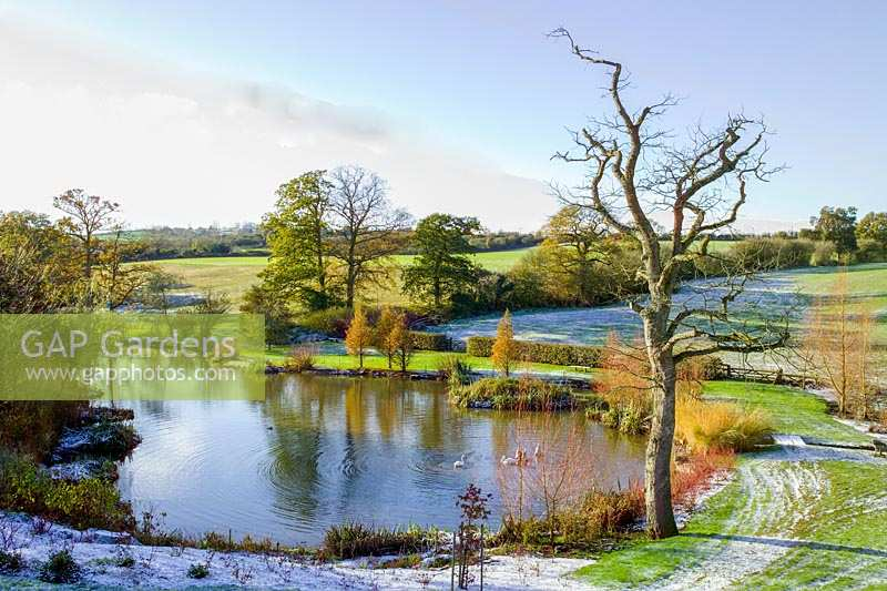 Lady Farm, Somerset, UK. ( Judy Pearce ) large garden in winter. wintery outline of large tree next to lake