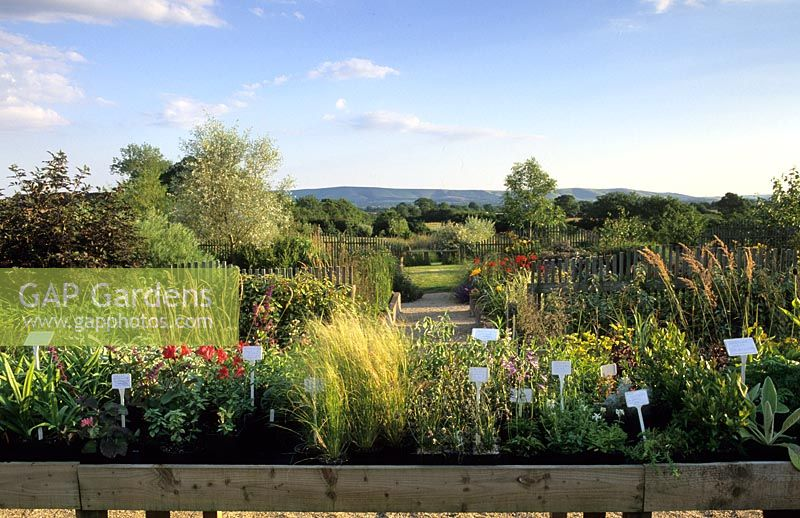 Marchants Sussex specialist nursery Ornamental grasses seed heads and perennials in autumn