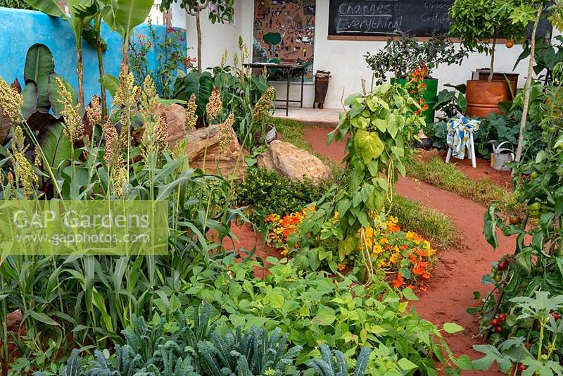 The Camfed Garden: Giving Girls in Africa a space to Grow. Looking across a bed of squash, Cucurbita maxima 'Jack o Lantern' to the work station.  Designer: Jilayne Rickards, Sponsors: The Campaign for Female Education