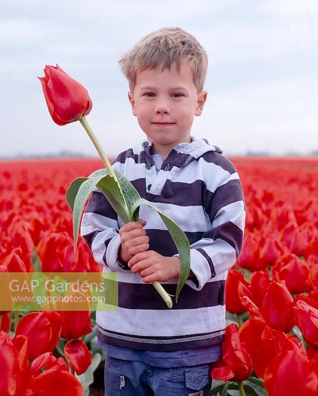 Boy holding red tulip