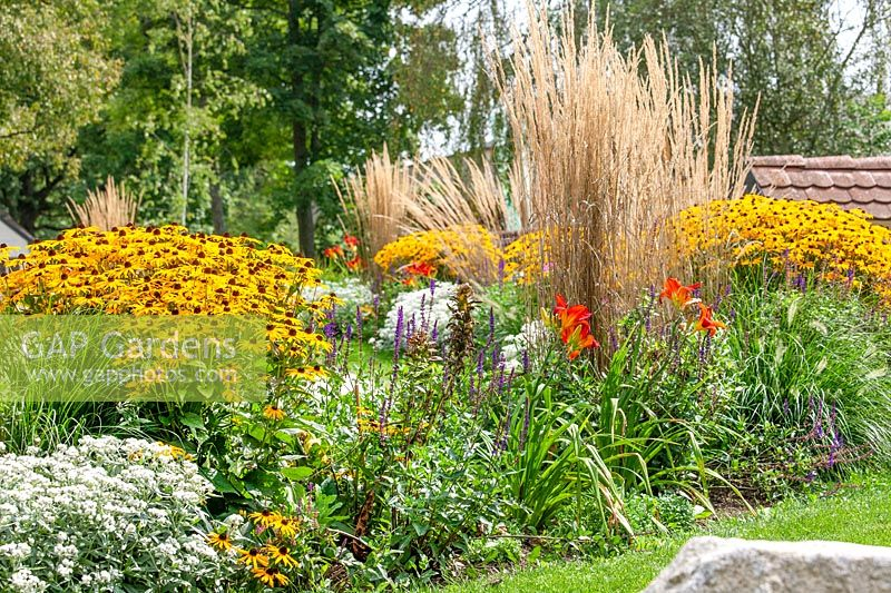 Planting with Rudbeckia and ornamental grasses