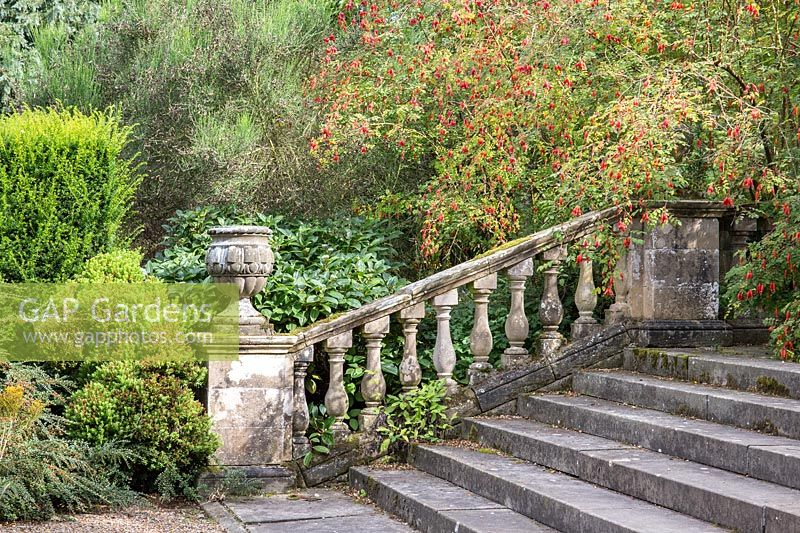 A wild rose grows alongside a flight of steps with antique balustrade and ornamental stone urn.