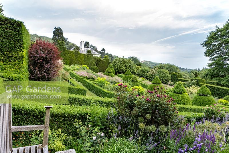 Sloping garden with Box topiary and fine planting, Herefordshire.