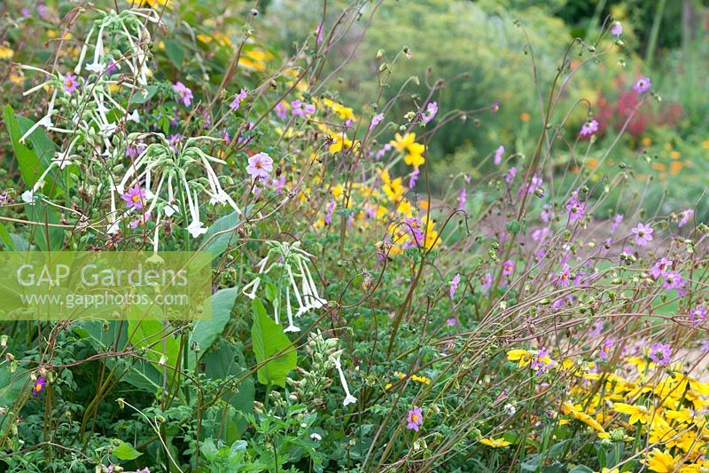 Gap Gardens Late Flowering Perennials And Annuals In Border