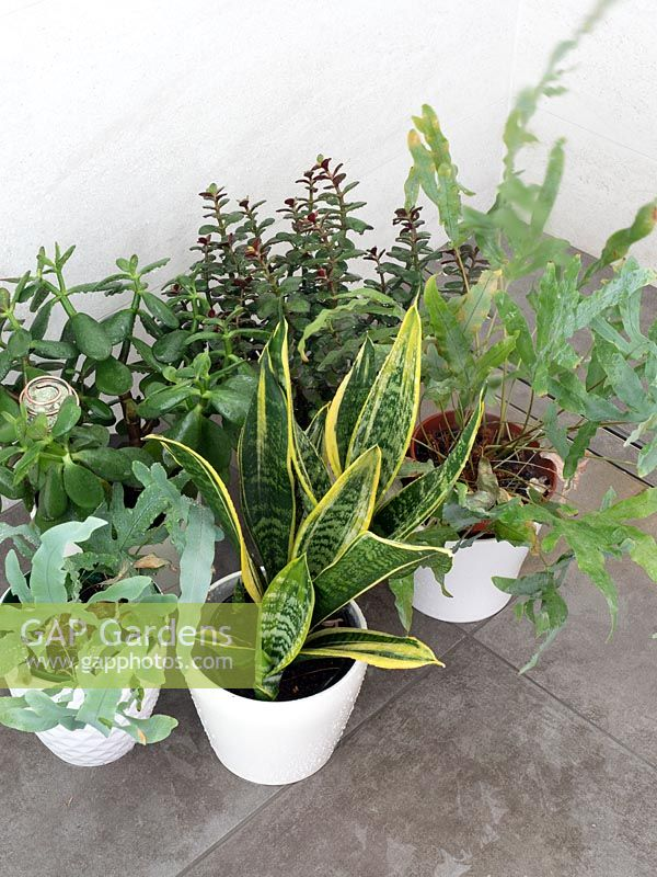 View pf potted houseplants on stone tiles floor.