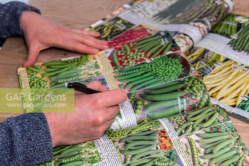 Person ordering vegetable seeds in catalogue.