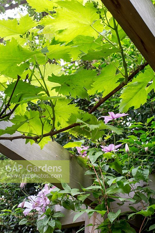 GAP Photos - Specialising in garden and plant photography
